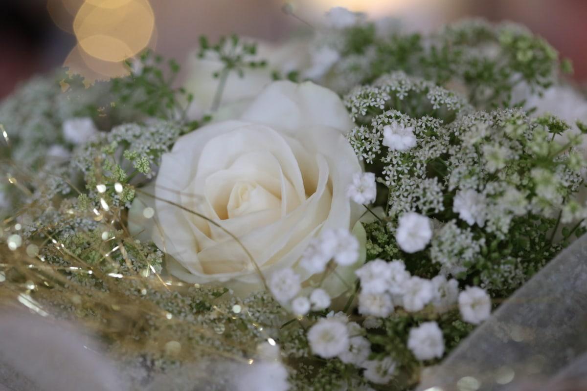 close-up, golden glow, rose, veil, wedding, wedding bouquet, white flower, bouquet, love, marriage