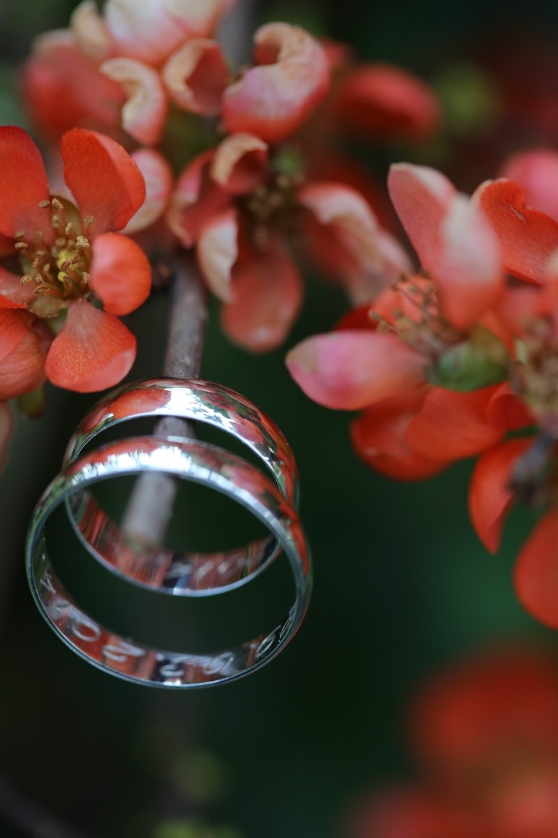 cabang, cahaya emas, logam, merah muda, cincin, semak, cincin kawin, pohon, musim, cabang