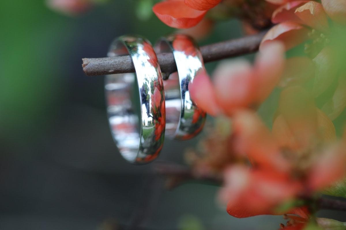 platinum, reflection, rings, shrub, wedding ring, tree, nature, flower, leaf, outdoors