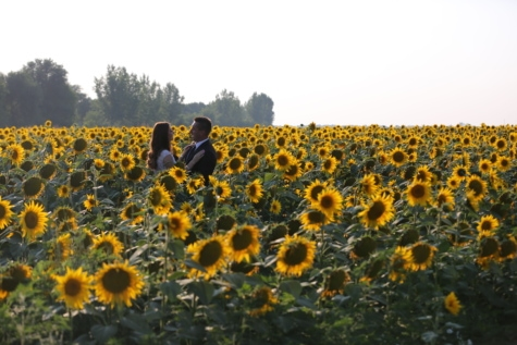 agriculture, bride, field, groom, love, people, summer season, sunflower, plant, yellow