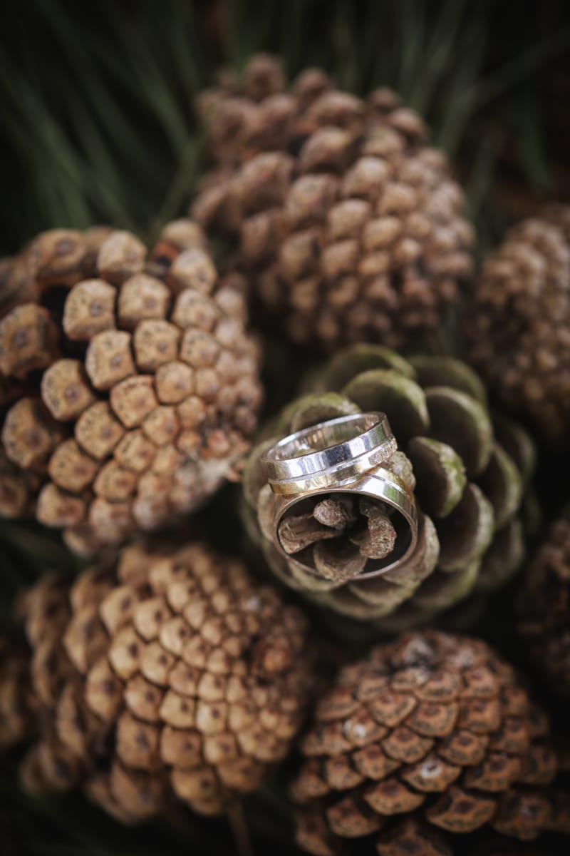 conifers, gold, golden glow, rings, shining, wedding ring, nature, upclose, still life, blur