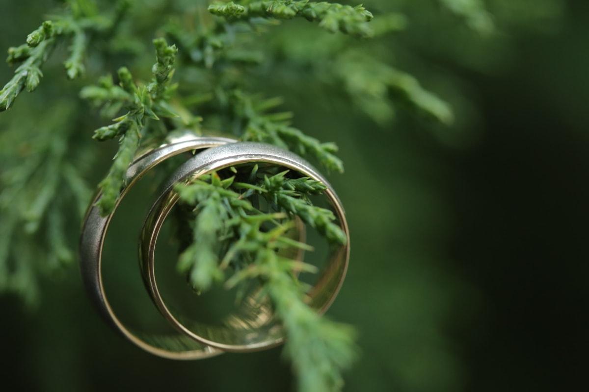 perto, coníferas, ouro, feito à mão, de suspensão, macro, par, anéis, brilhando, anel de casamento