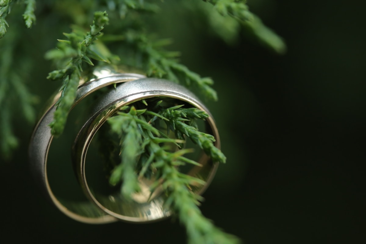 craft, expensive, handmade, luxury, rings, wedding ring, herb, plant, leaf, conifer