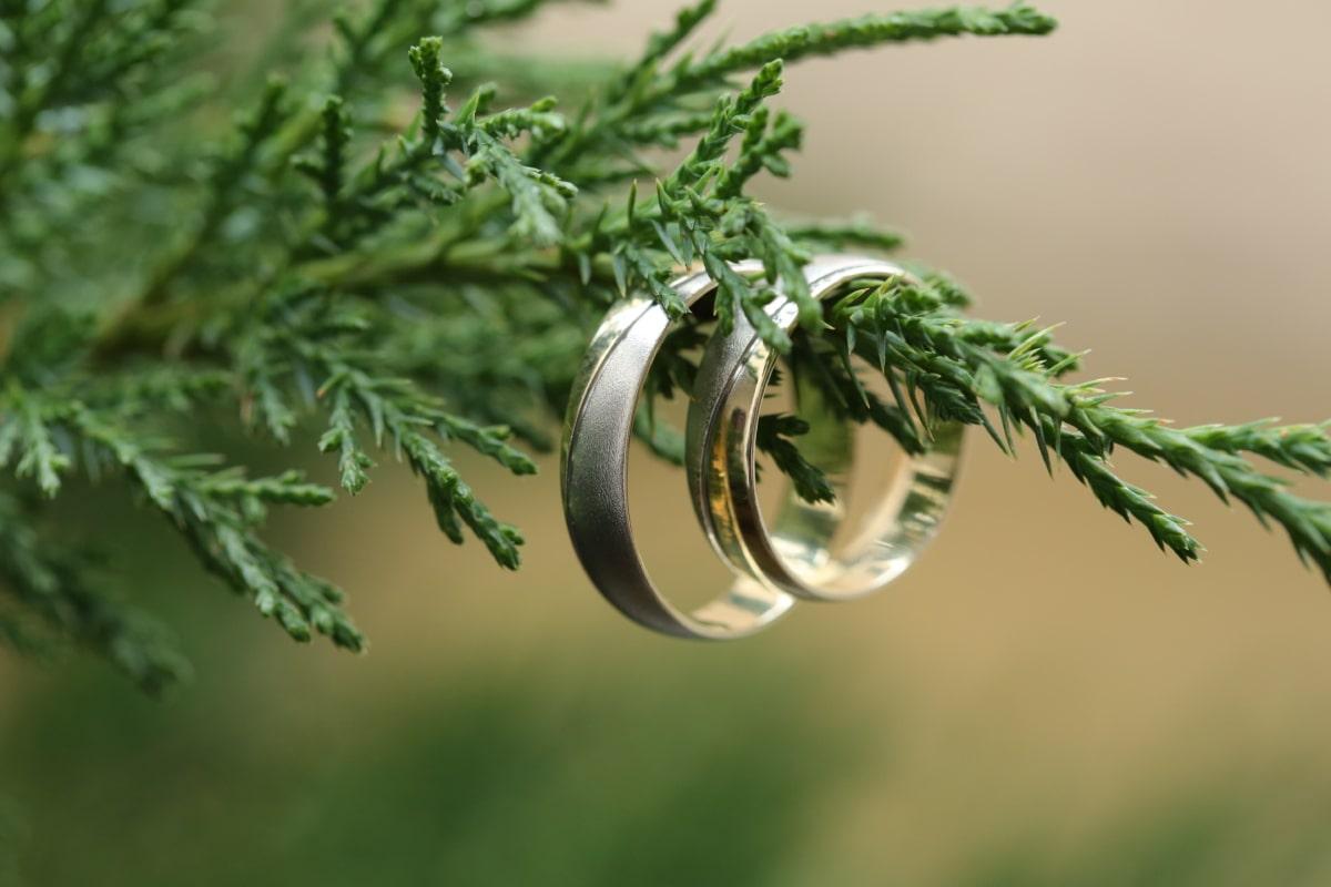 ทอง, แหวนแต่งงาน, สาขา, ทำด้วยมือ, แขวน, หรูหรา, แพลตตินั่ม, ต้นไม้, เอเวอร์กรีน, สมุนไพร