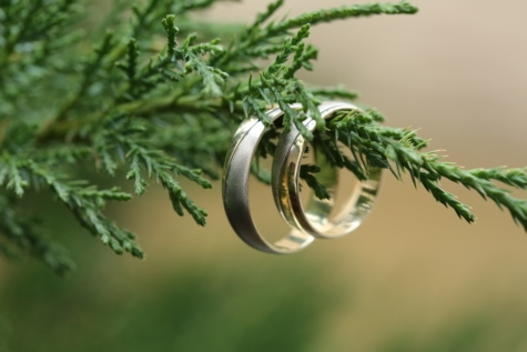 gold, wedding ring, branches, handmade, hanging, luxury, platinum, tree, evergreen, herb
