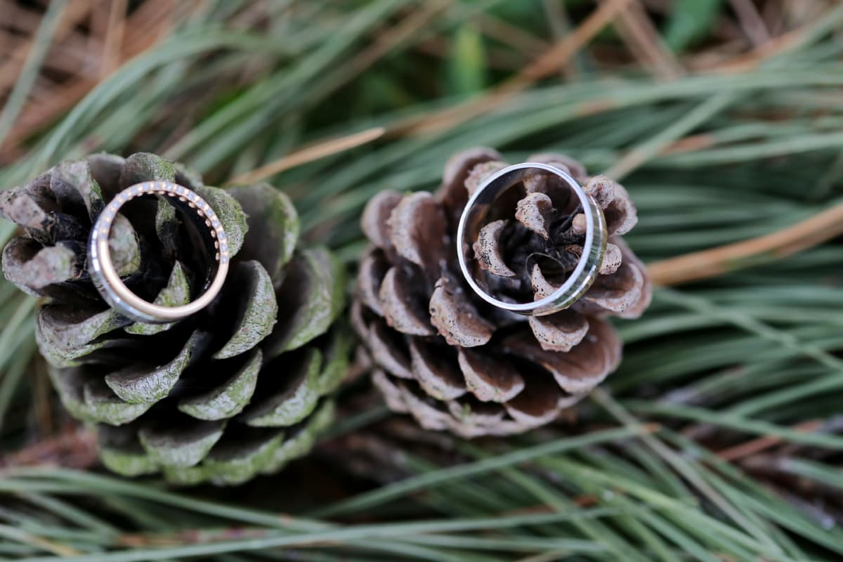 conifers, green leaves, jewelry, wedding ring, pine, wood, nature, decoration, christmas, tree