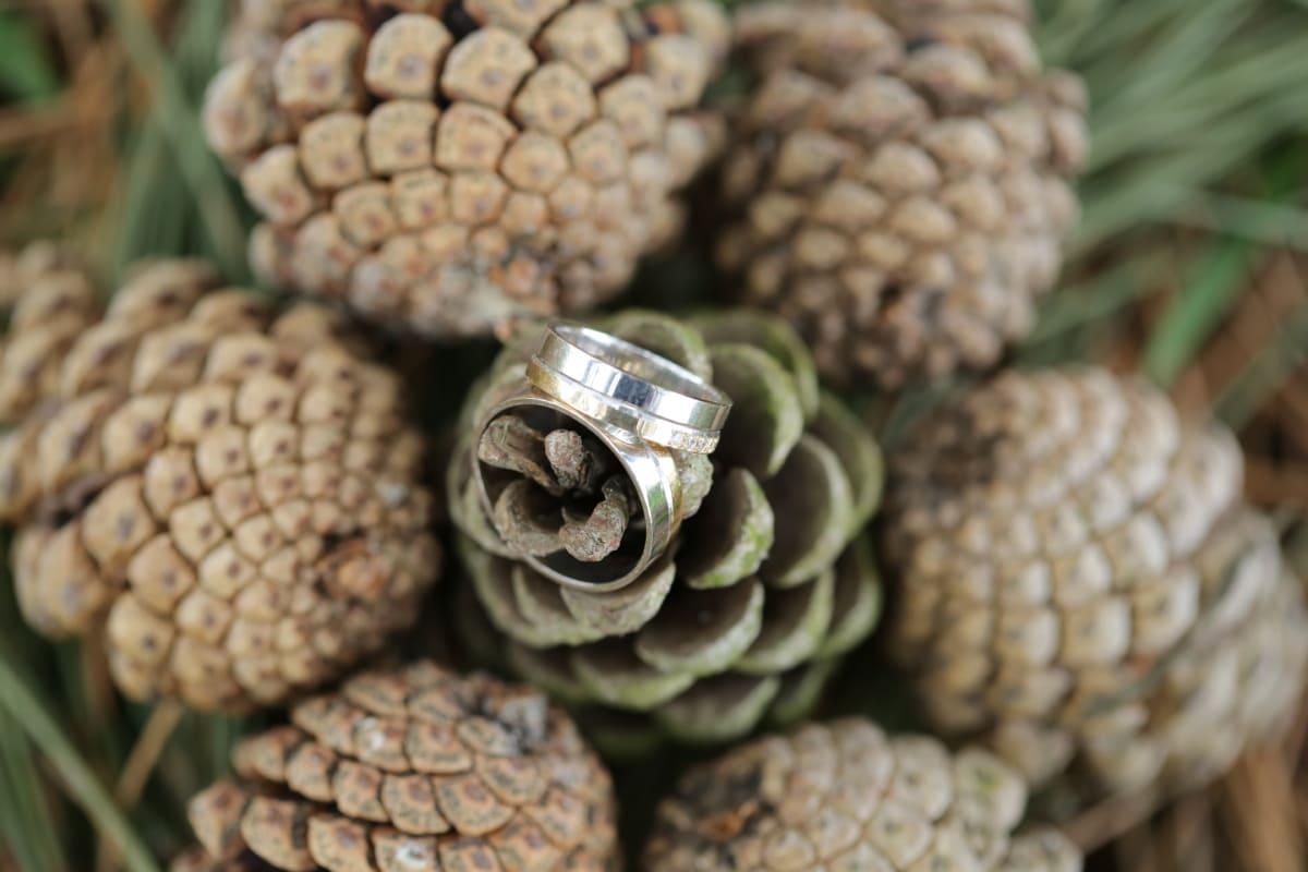 conifer, decoration, detail, gold, golden glow, handmade, jewelry, metal, still life, symbol
