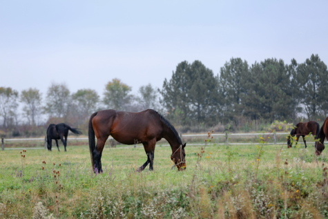 grass, grazing, horses, livestock, wildlife, farm, field, horse, animal, mare