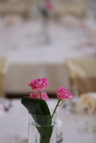 玻璃, 玫瑰, 桌布, 三, 花瓶, 水, 芽, 花, 花, 粉色