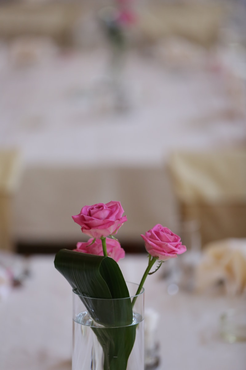glass, roses, tablecloth, three, vase, water, bud, flower, flowers, pink