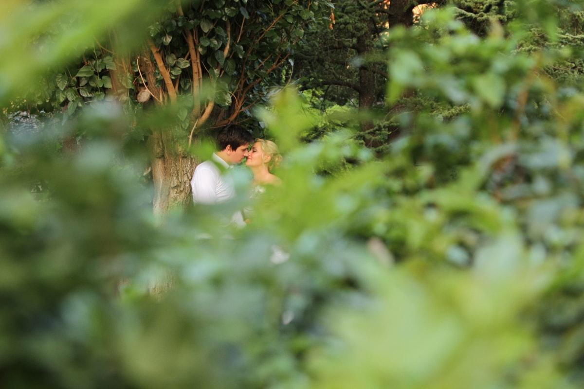 affection, boyfriend, forest, girlfriend, hug, kiss, romantic, togetherness, tree, plant