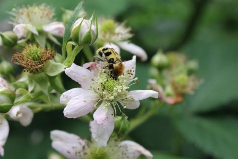 böcek, tozlaşma, bahar zamanı, bitki, çiçek, doğa, Bahçe, Çiçek açmak, çiçekler, ot