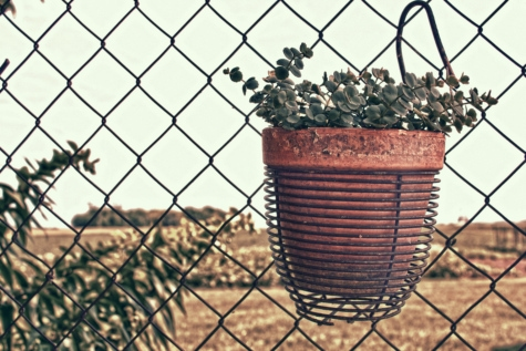 flowerpot, flowers, terracotta, wires, fence, iron, barrier, wire, cage, steel