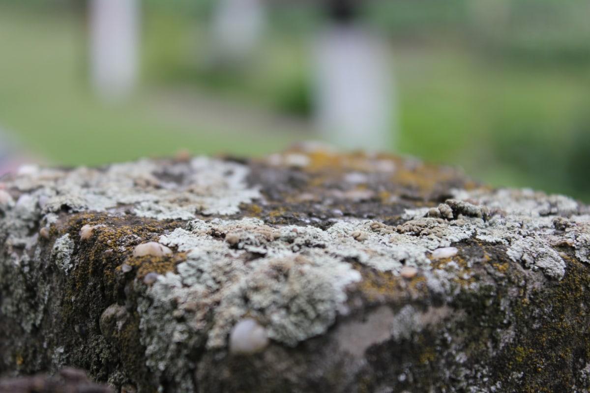 lichen, blur, close-up, macro, stones, detail, moss, stone, dry, dry season