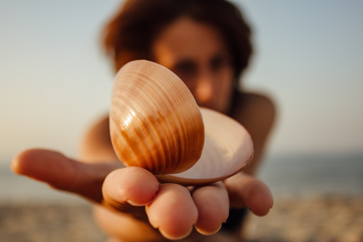 Seashell, foto modello, giovane donna, spiaggia, rilassante, luce del sole, stagione estiva, donna, sabbia, sfocatura
