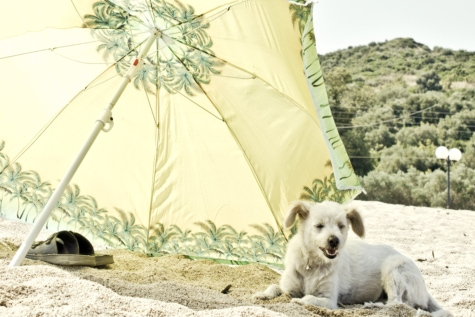 puppy, dog, summer, hot, enjoyment, beach, parasol, pet, cute, animal