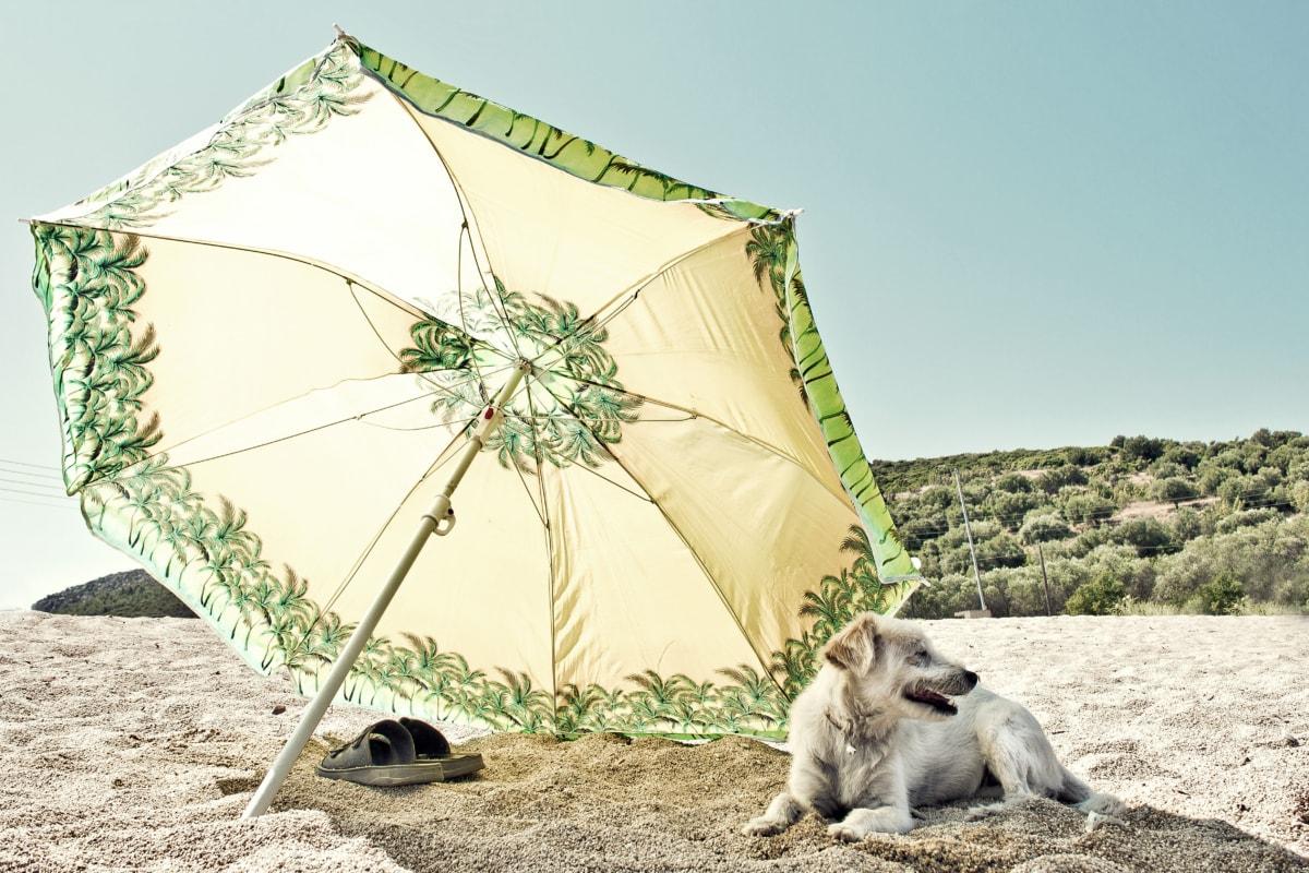 dogs, resort area, summer, rest, hot, beach, sunshine, canopy, sand, sea