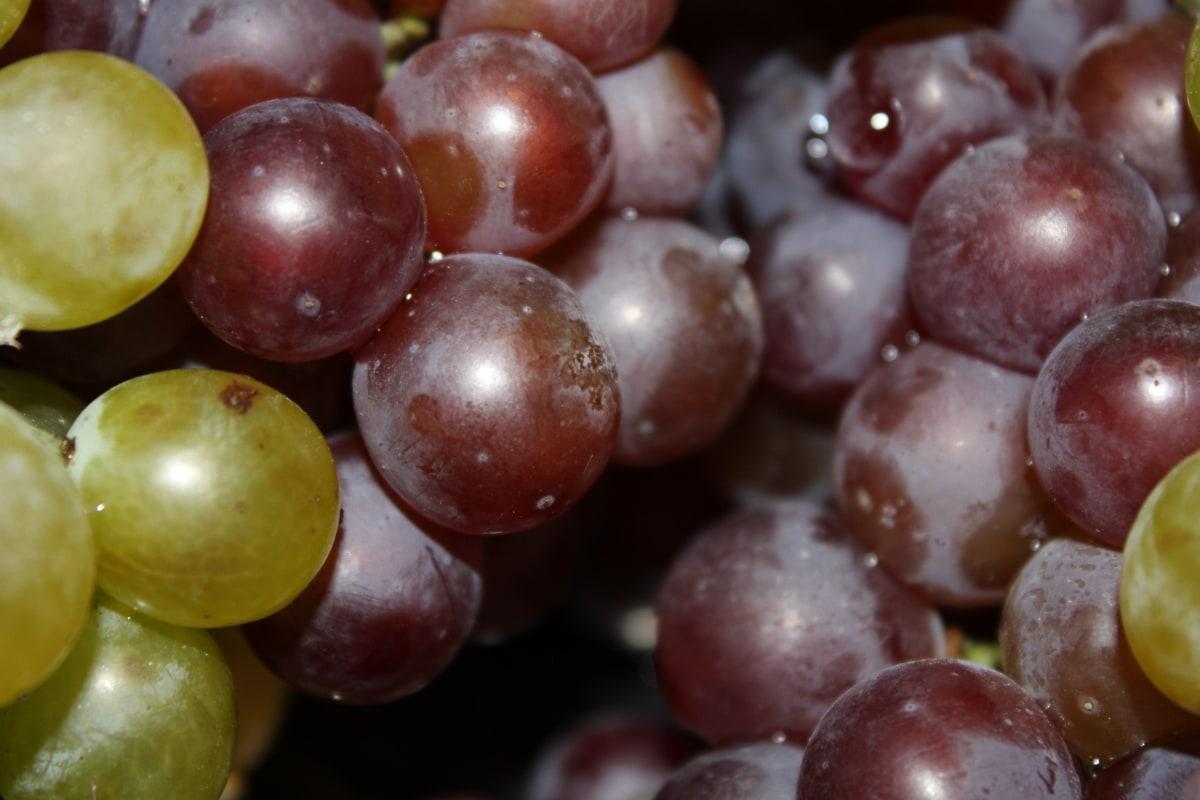 grapes, viticulture, details, delicious, food, nutrition, sweet, grape, fruit, berry