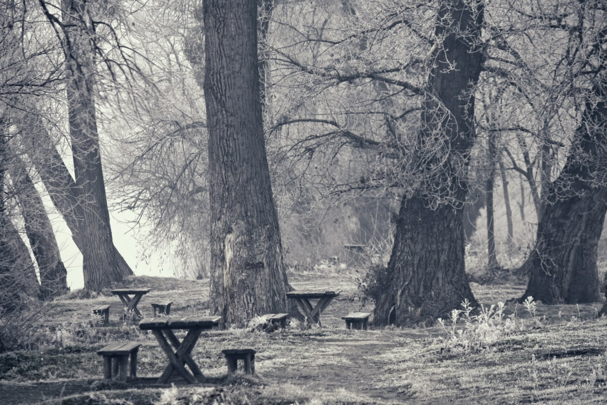 monochrome, winter, frost, cold, forest, sepia, bench, landscape, tree, trees