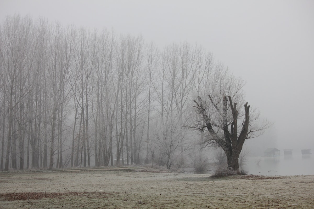 fog, frost, riverbank, mist, cold, cold water, weather, snow, wood, landscape