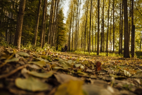alone, forest path, forest trail, person, walking, autumn season, forest, landscape, nature, trees