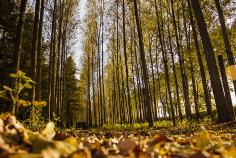 leaves, forest trail, ground, autumn, tree, nature, shrub, leaf, forest, wood
