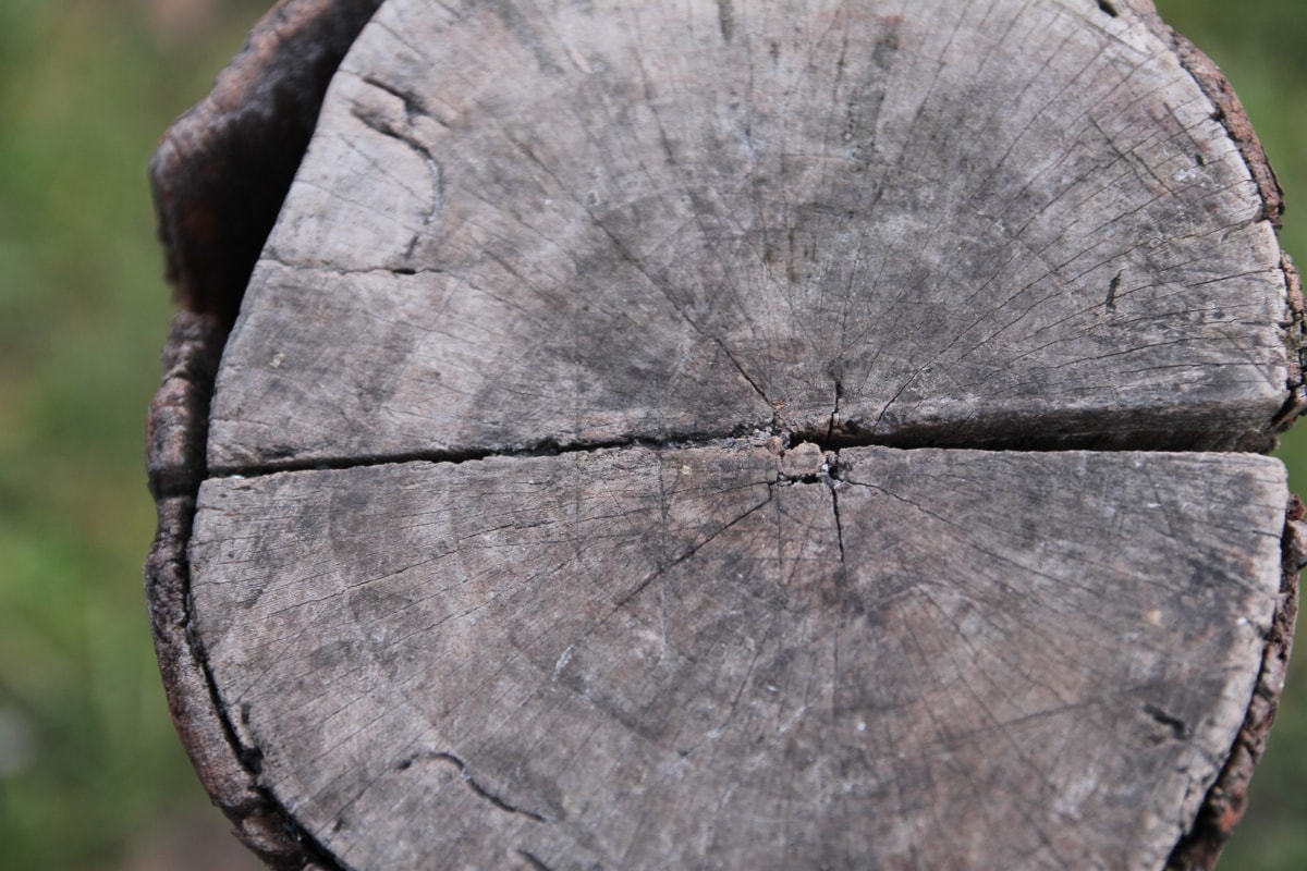 wood, bark, hardwood, damage, firewood, texture, nature, old, tree, wooden