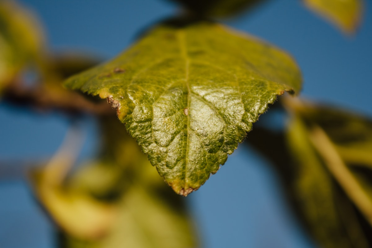 green leaves, leaves, leaf, tree, plant, invertebrate, nature, outdoors, flora, bright