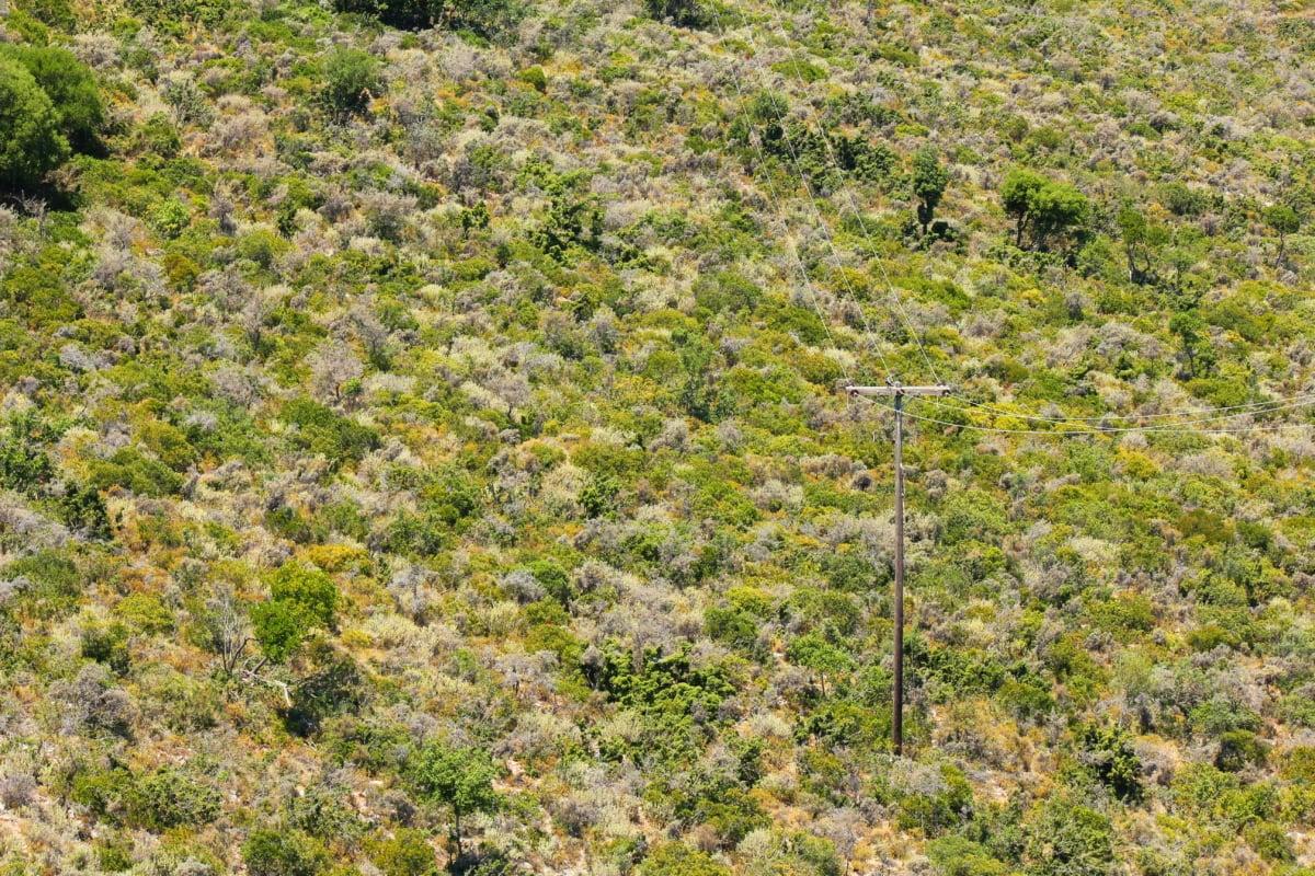 downhill, electricity, wires, slope, hillside, distribution, plant, tree, landscape, nature