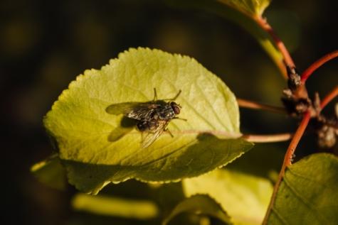hmyz, křídla, zblízka, zelené listy, závod, list, příroda, členovec, venku, bezobratlých