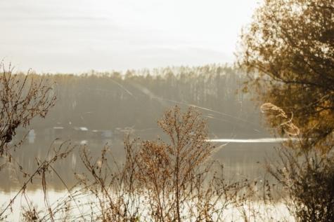 herfst seizoen, spinnenweb, struik, lakeside, kruid, natuur, dageraad, Winter, bos, bomen