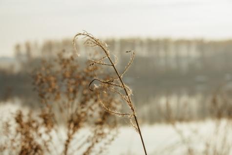 jesen, paukova mreža, korov, priroda, zima, zora, zalazak sunca, polje, krajolik, Sunce