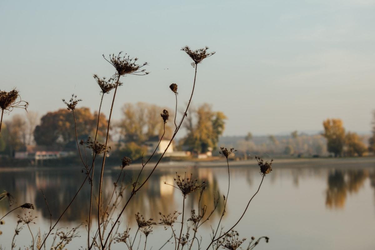herb, silhouette, dry season, calm, atmosphere, lakeside, tree, dawn, nature, plant