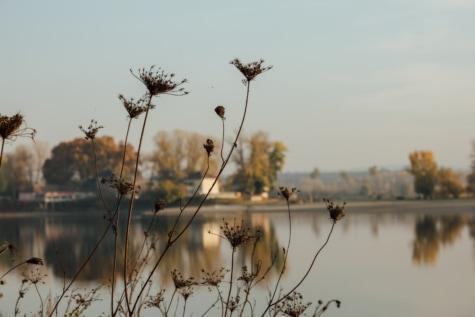 erva, silhueta, estação seca, Calma, atmosfera, beira do lago, árvore, amanhecer, natureza, planta