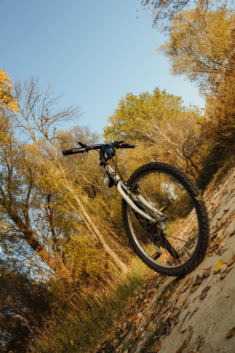 mountain bike, forest road, mountain, bicycle, tree, autumn, wheel, nature, wood, outdoors