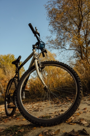 mountain bike, bicycle, forest path, autumn, cycling, cycle, device, wheel, bike, cyclist