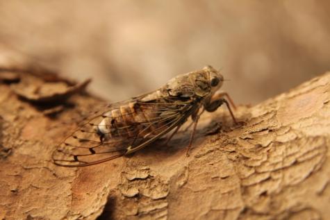 Mariposa, corpo, perto, artrópode, invertebrado, inseto, vida selvagem, animal, selvagem, asa