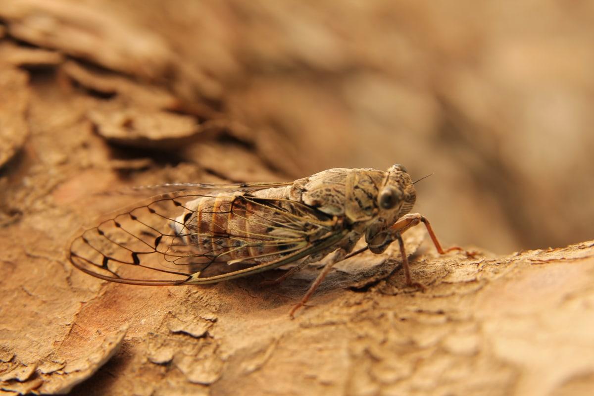 moth, big, insect, legs, wings, close-up, nature, arthropod, invertebrate, wildlife