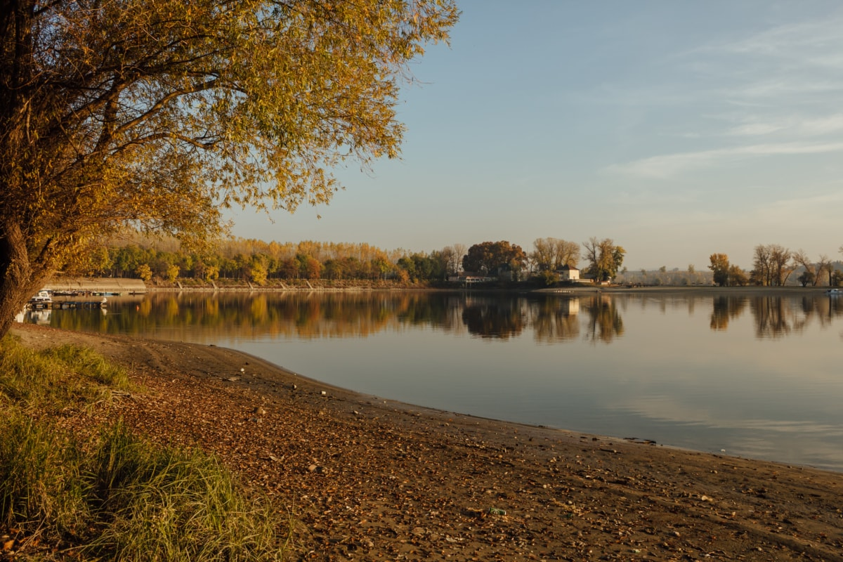 resort area, lakeside, soil, beach, tree, reflection, forest, river, water, lake
