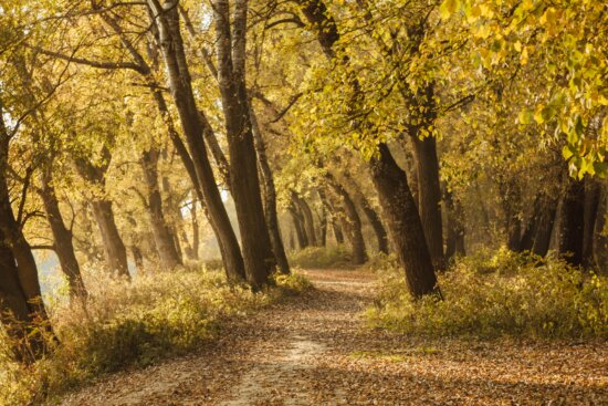 autumn, forest road, yellow leaves, oak, trees, park, forest, tree, leaf, landscape