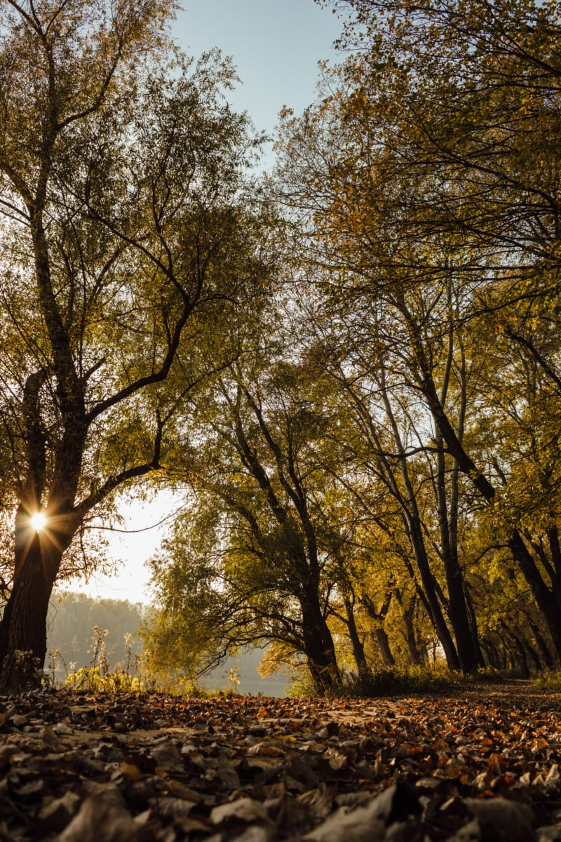 sunshine, forest path, autumn season, national park, alley, scenic, forest, autumn, park, tree