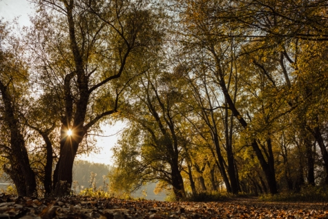 sunshine, forest trail, september, autumn, park, tree, forest, trees, landscape, leaf