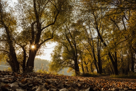 autumn, forest path, sunrays, sunset, forest, landscape, tree, trees, leaf, nature