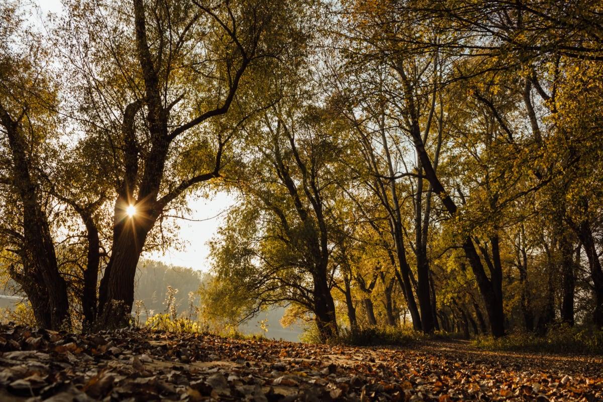 Sonnenschein, Schatten, Sonnenstrahlen, Waldweg, gelblich-braun, gelbe Blätter, Ökologie, Herbst, Struktur, Bäume