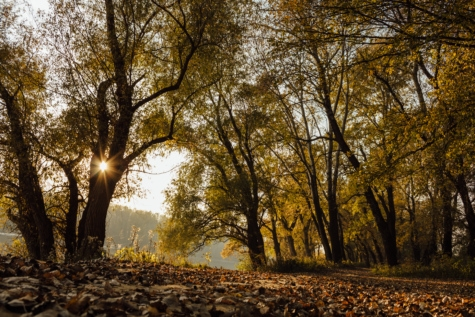 sunshine, shadow, sunrays, forest path, yellowish brown, yellow leaves, ecology, autumn, tree, trees