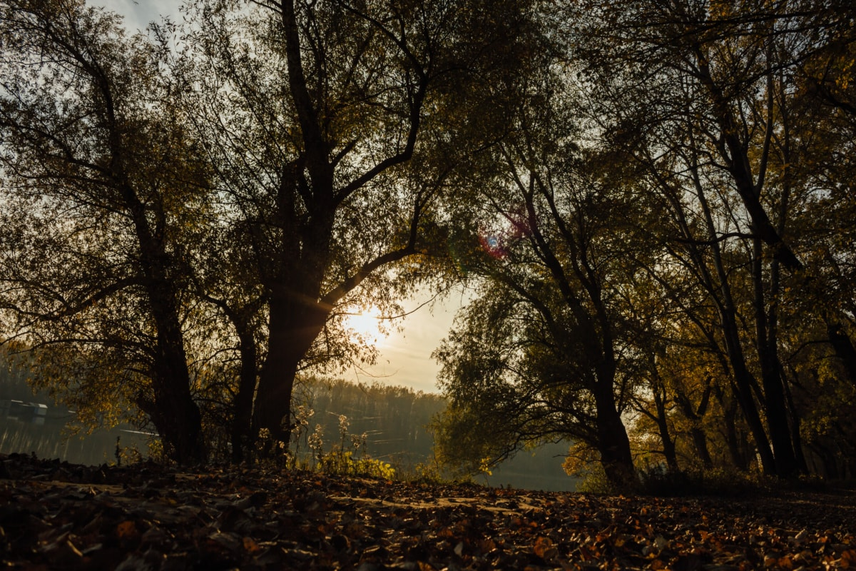 shadow, forest path, darkness, autumn, forest, tree, park, landscape, trees, season