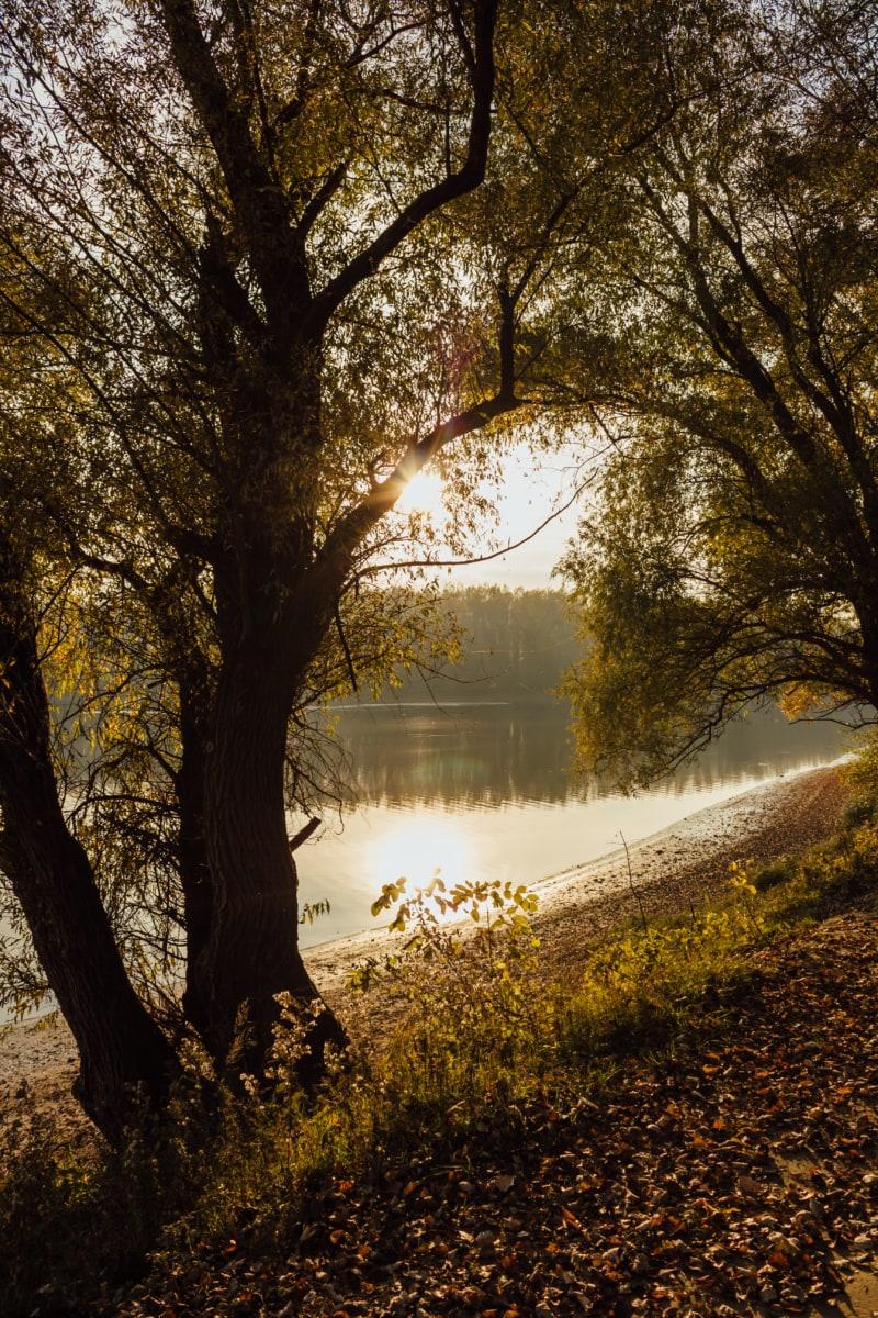 sunshine, autumn season, riverbank, sunspot, coastline, forest, rapeseed, dawn, park, tree