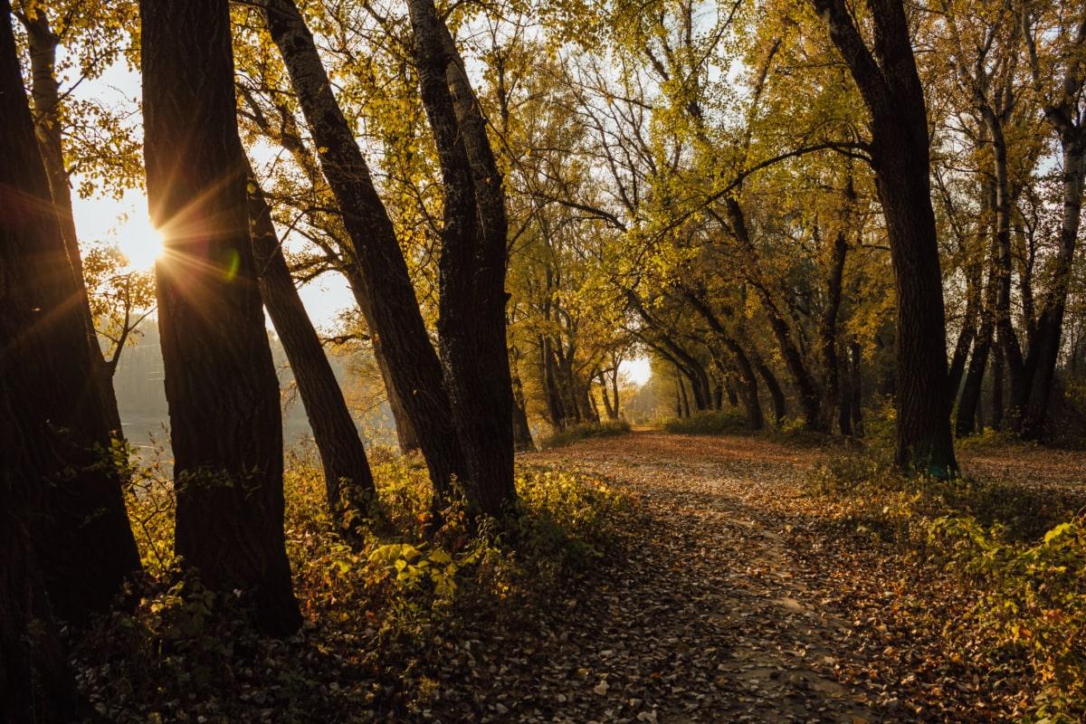 solskinn, høstsesongen, skogen banen, solstrålene, trær, blad, daggry, landskapet, treet, parkere