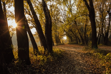 sunshine, autumn season, forest path, sunrays, trees, leaf, dawn, landscape, tree, park
