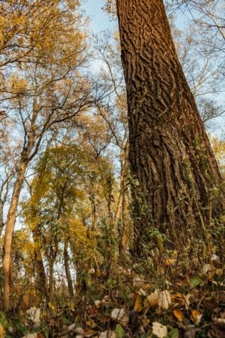 fák, magas, függőleges, kéreg, tölgy, erdő, ősz, természet, táj, levél